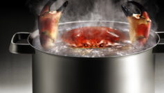 Funny Wallpapers Crab In Boiling Water 093268