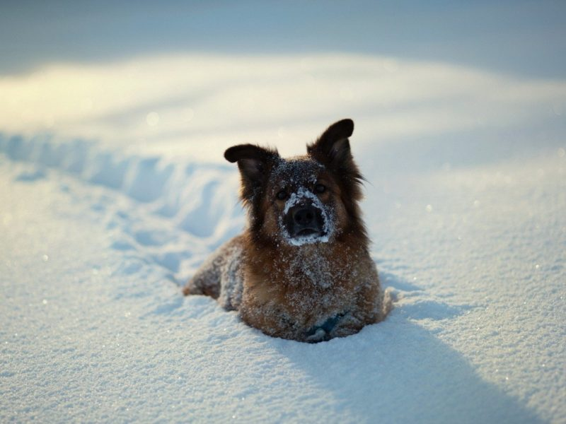 A Dog In Snow