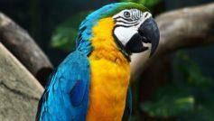 Amazing Parrot