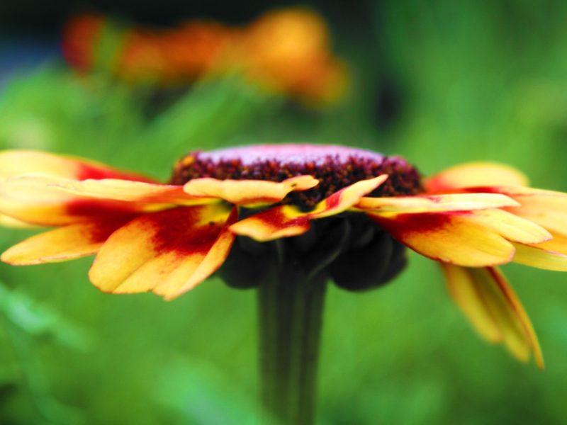 Flower Detail 1280×800