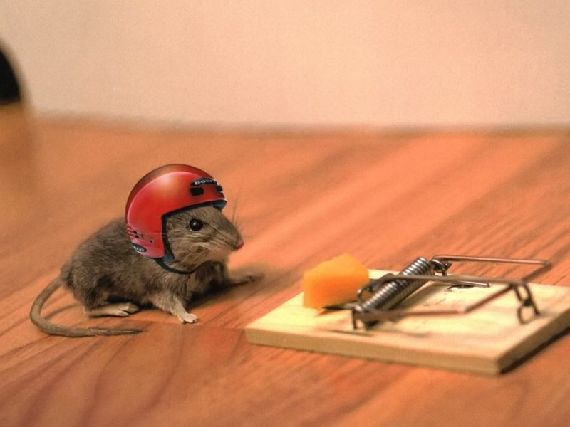 Funny Mouse Trap Funny