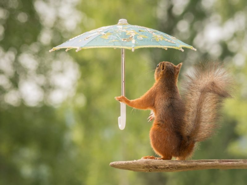 Funny Squirrel With Umbrella Funny