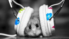 Music Fan Music Little Hamster 2218 1920×1200