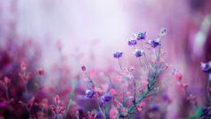 Pink Begonia Flowers 1280×800