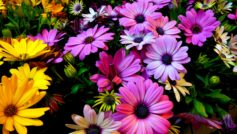 Purple Yellow Daisy Flowers 2560×1440