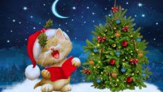 Santa Cat Christmas New Year