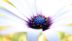 White Purple Flower 1280×800