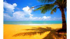 Yellow Beach 4k