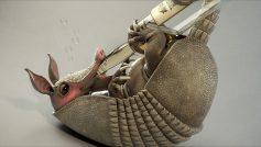 Animals Birds33