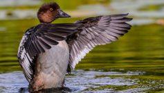 Animals Birds45