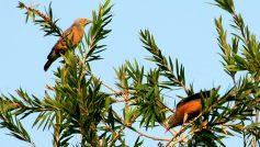 Animals Birds49