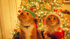 Animals Who Hate Christmas 23