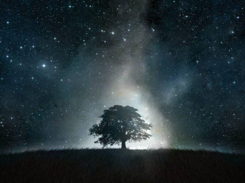 Black Tree Galaxy