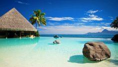 Bar In Paradise