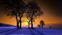 Sunset75
