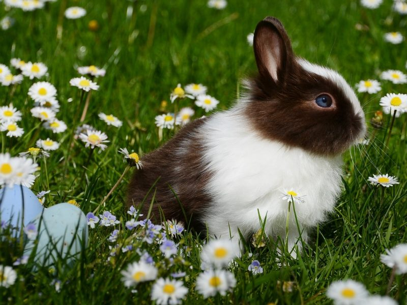 A Beautiful Rabbit Is Sitting On Grasses With Flowers